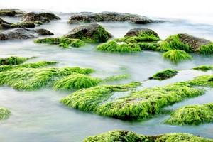 Algen, die grüne Kraft aus dem Meer gegen Cellulite