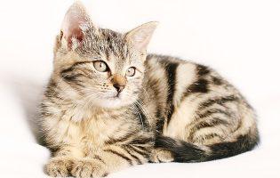 101 gesunde Katzenschmaus-Verwöhnpakete von Qualipet zu gewinnen