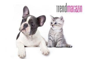 Wirksamer Zeckenschutz für Hund und Katze