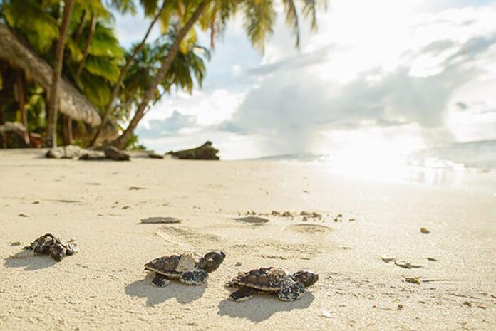 Gewinne eine Karibik-Urlaub im Wert von 150'000 Franken