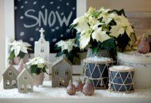 Winterwelten mit Weihnachtssternen