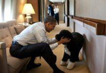 Eines der bekanntesten Fotos von Bo zeigt ihn 2011 mit Herrchen Barack Obama an Bord der Air Force One.