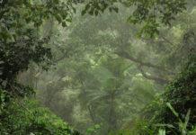 Das britische Dschungelcamp findet üblicherweise in einer ehemaligen Bananenplantage in Murwillumbah