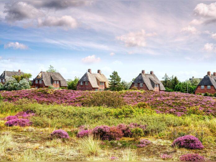 Prägen den Charme der Insel Sylt: Reetdachhäuser