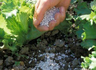 Algenkalk kann als ökologischer Gartendünger eingesetzt werden.