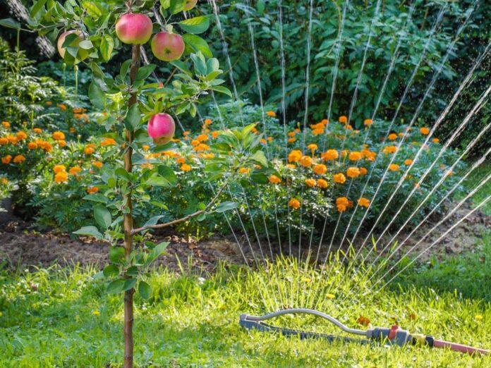 Unter anderem die Bewässerung des Gartens kann per Sprachbefehl gesteuert werden.