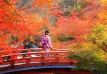 Wenn der Herbst das Land in Rottöne taucht
