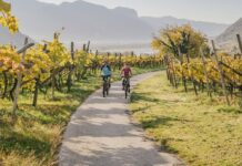 Radtour durch die Weinreben mit Blick auf den Kalterer See