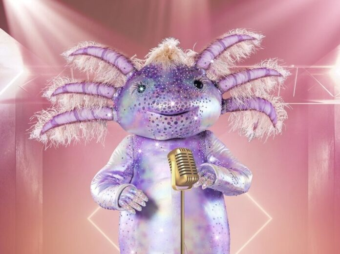 Das Axolotl wird neben der Chili oder dem Mops auf der